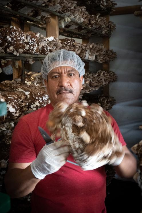 Mushroom Farm Worker - Watsonville, CA