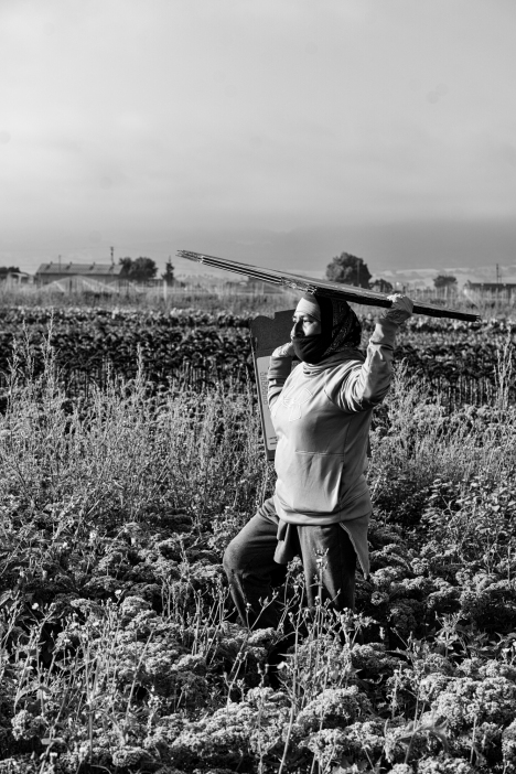 Maria - Harvesting curly Kale